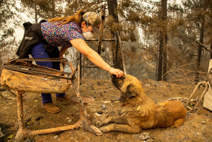 Care One Credit Card >> Help the animal victims of the California fires ...